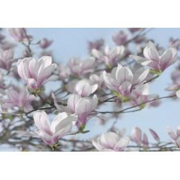 Mural Papel de Parede Magnolia