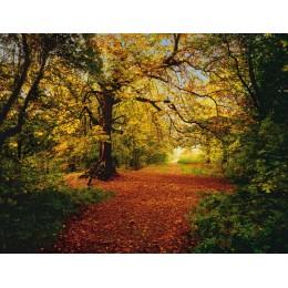 Fotomural Papel de Parede Autumn Forest