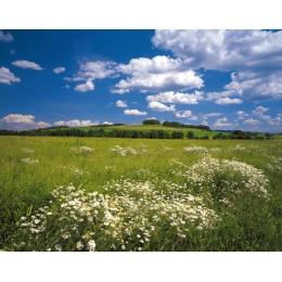 Fotomural Papel de Parede Meadow