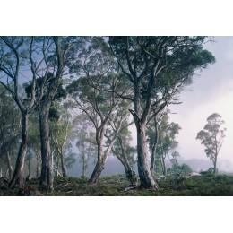 Fotomural Papel de Parede Fantasy Forest