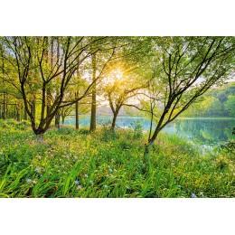 Fotomural Papel de Parede Spring Lake