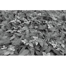 Fotomural Papel de Parede Forest Floor