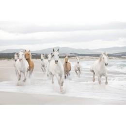 Papel de Parede Cavalos Brancos