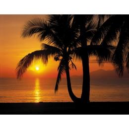 Mural Papel de Parede Palmy Beach Sunrise